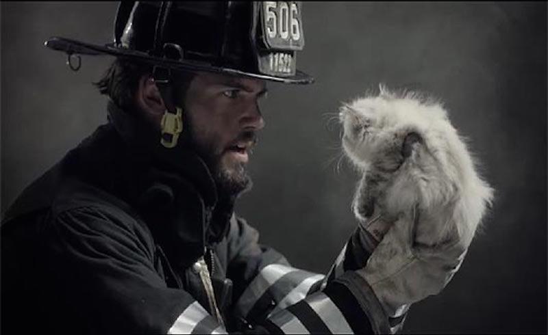 la escena salva al gato